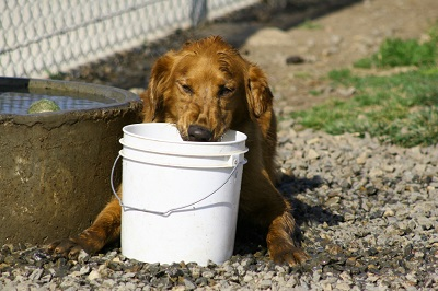 image for Summer Heat Stroke and Dogs