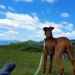 Thumbnail for Summer Vacation with Your Dog